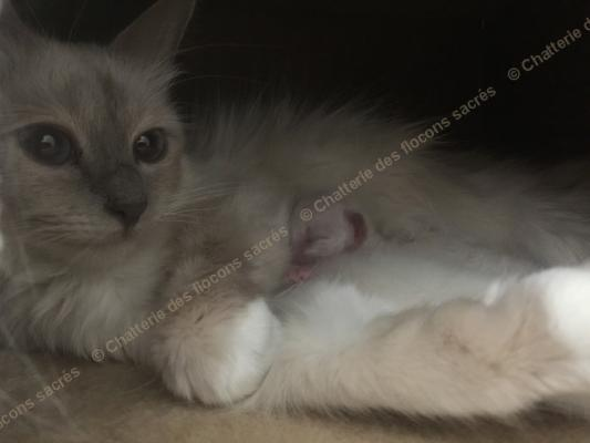CHATONS 2015-08-19-17h16