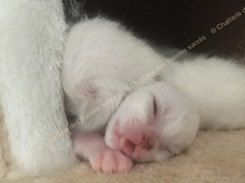 CHATONS 2015-08-21-18h51