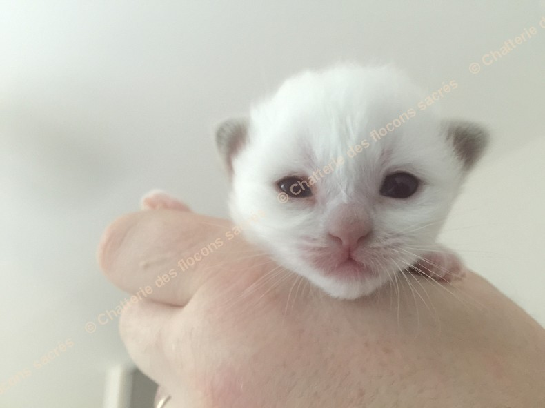 CHATONS 2015-08-25-19h08