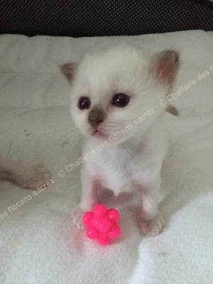 CHATONS 2015-09-04-16h55-1