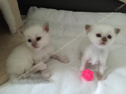 CHATONS 2015-09-04-16h55