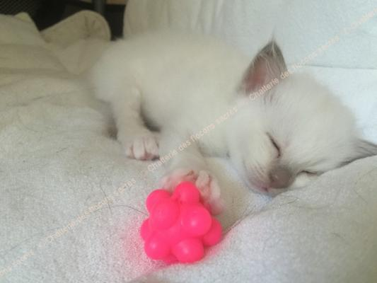 CHATONS 2015-09-09-10h56