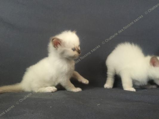 CHATONS 2015-09-12-10h43-2