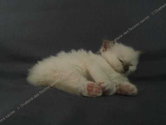 CHATONS 2015-09-17-20h51-1
