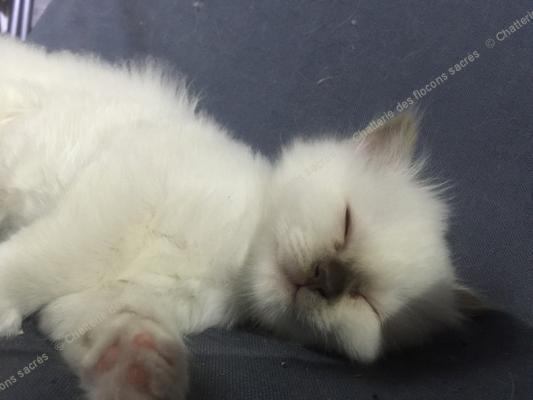 CHATONS 2015-09-21-20h51