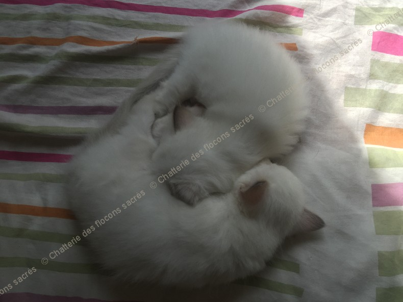 CHATONS 2015-09-26-12h55-1