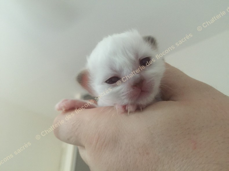 CHATONS 2015-08-25-19h08-2