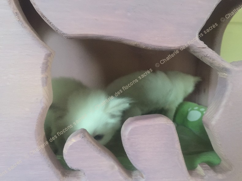CHATONS 2015-09-12-10h50