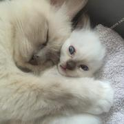 CHATONS 2015-09-15-15h33-2