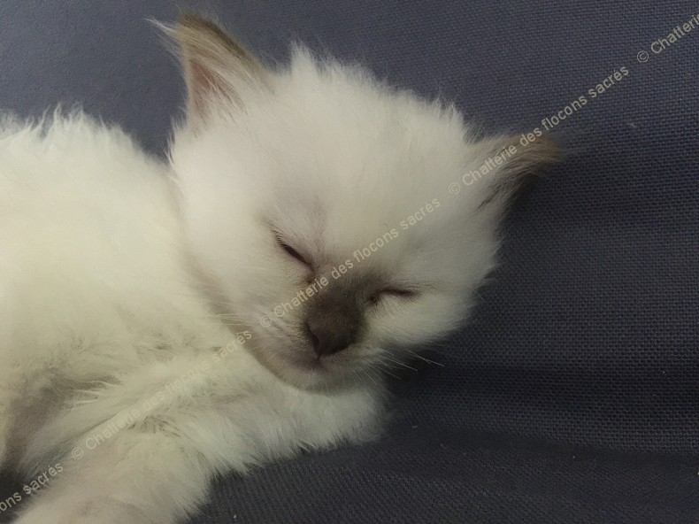 CHATONS 2015-09-17-20h51-2
