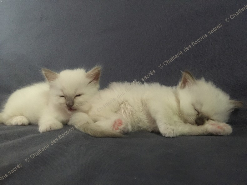 CHATONS 2015-09-17-20h54-4