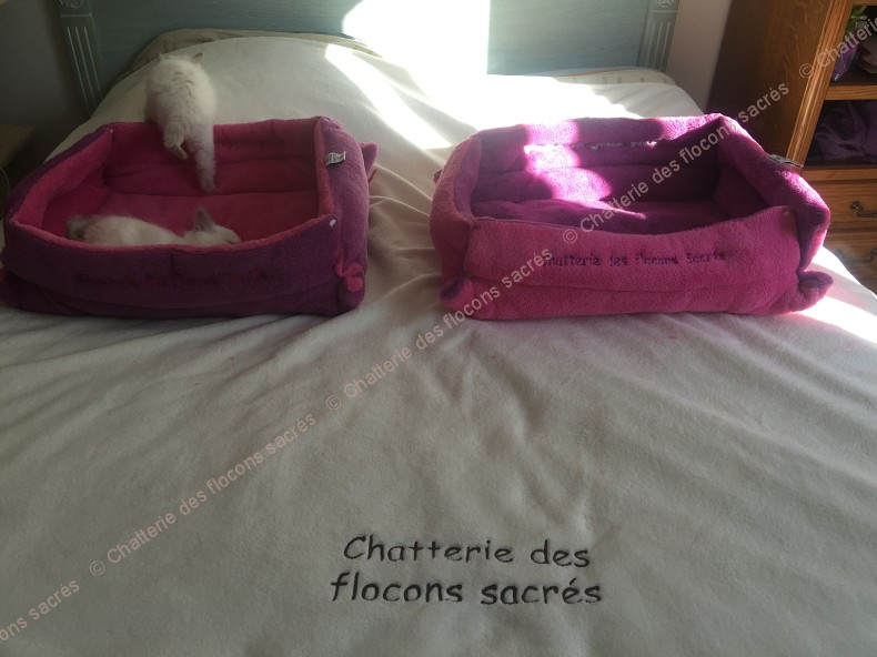 CHATONS 2015-09-30-16h39-1