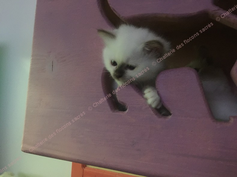 CHATONS 2015-10-02-20h51