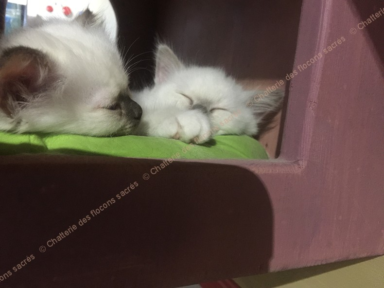 CHATONS 2015-10-06-19h14