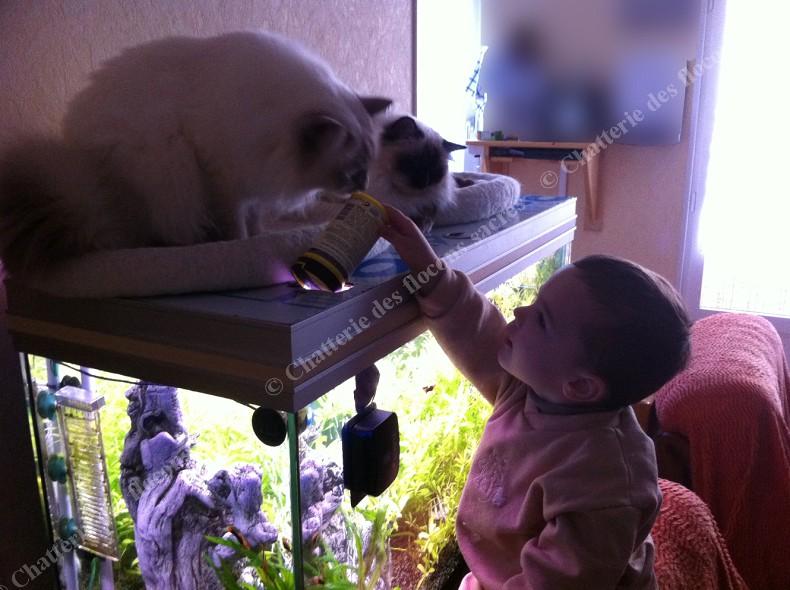 Cocoon Chataigne et notre fils